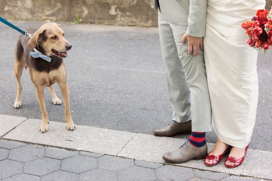 brides' shoes and cute dog with bow tie